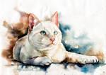Cat Volt, watercolor