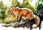 Fox, watercolor
