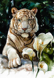 White tiger, watercolor