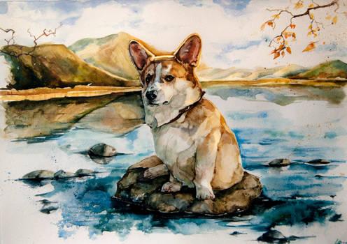 Dog, watercolor
