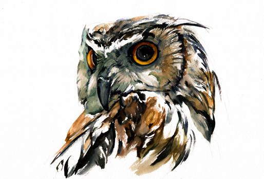 owl, watercolor