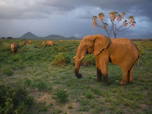 Kenya safari holiday travel