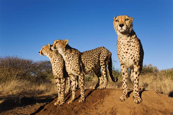Nambia Safari Travel - Explore Namibia!