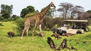 Botswana Safari Travel - Explore Botswana!