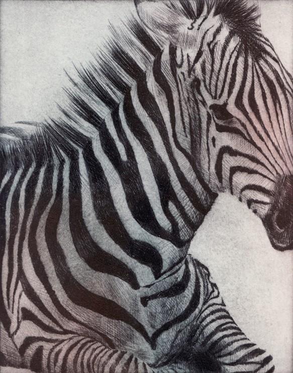 Zebra 4 by ddkolker