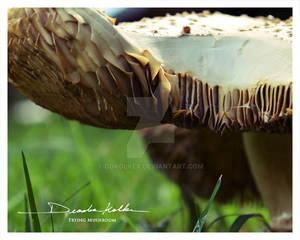Badger, Badger, Badger, Mushroom, Mushroom