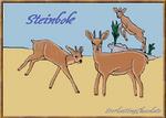 African Animal - Steinbok
