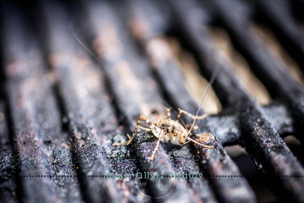 Cricket Cavern by Little-Kitten-77