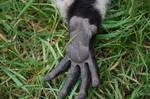 Rough lemur's hand