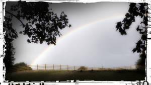 Dog Walk Rainbow