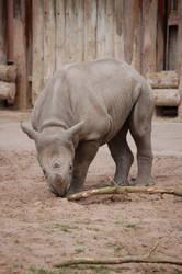 Baby black Rhino by sicklittlemonkey
