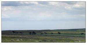 Moor View 2