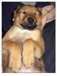 Wilson the Puppy
