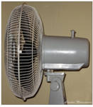 My number 1 fan