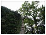 Corbridge graveyard