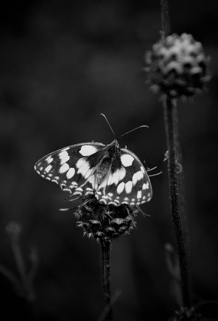 045 5bw by Placi1