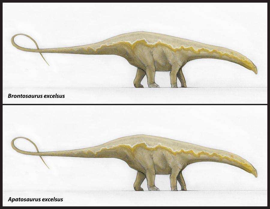 Brontosauro