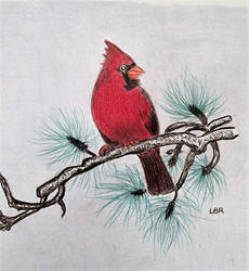 cardinal in pine tree by LindaB1141
