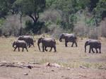 African Elephant Stock 4