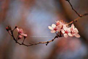 Underneath the Spring Sun by Simina31