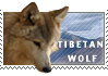 Love Tibetan Wolves by MachatiStamps