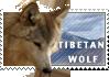 Love Tibetan Wolves by MachatiStamps