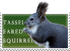 Tassel-eared Squirrel love by MachatiStamps