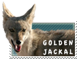 Golden Jackal stamp by MachatiStamps