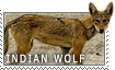 Indian Wolf love by MachatiStamps
