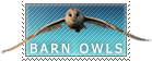 Barn Owls by MachatiStamps