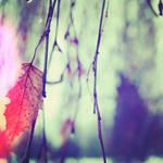 Leaves Leave