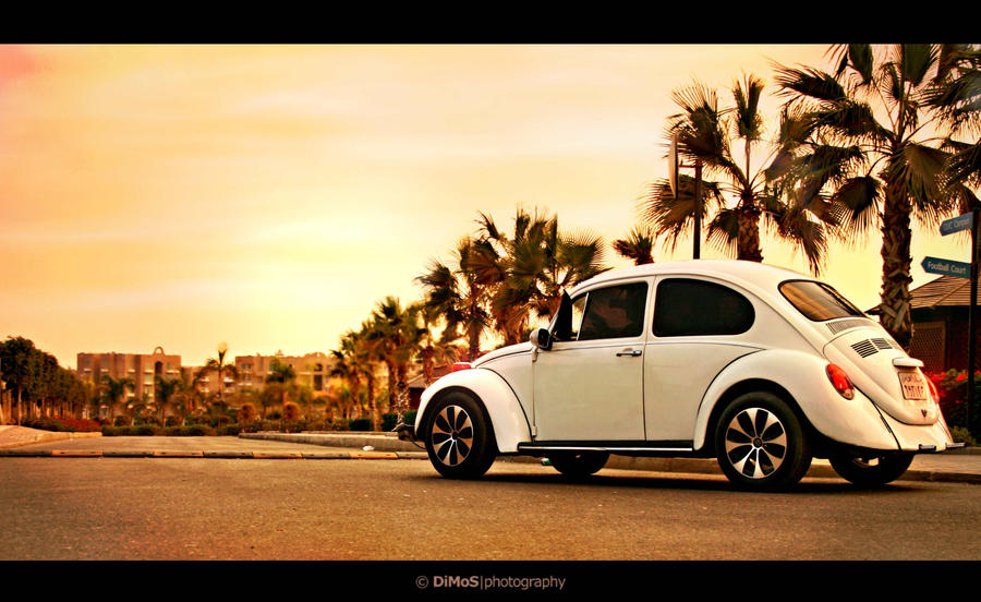 The White Beetle by DiMoZ