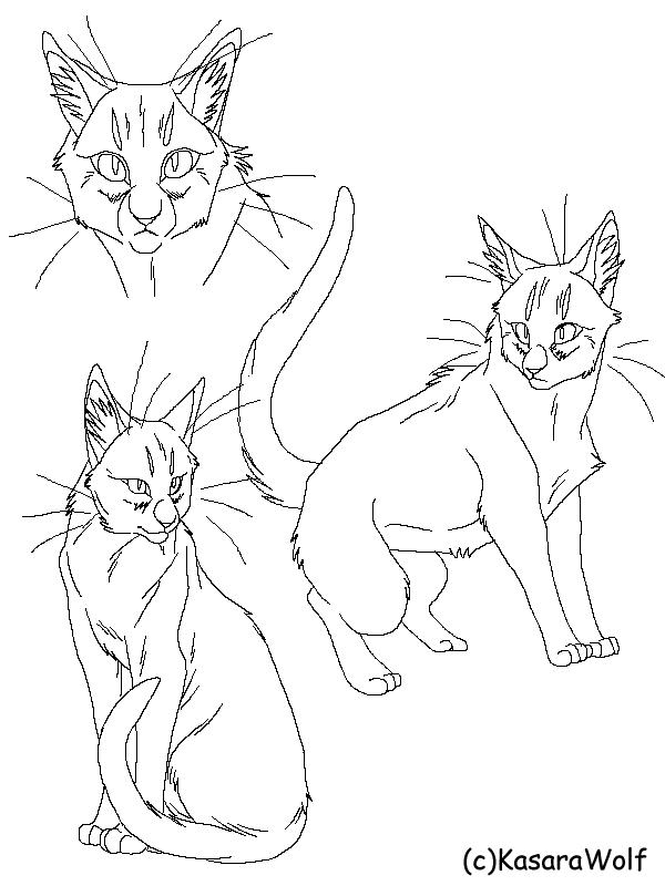 Real Cat CS Templateby Kasara Wolf