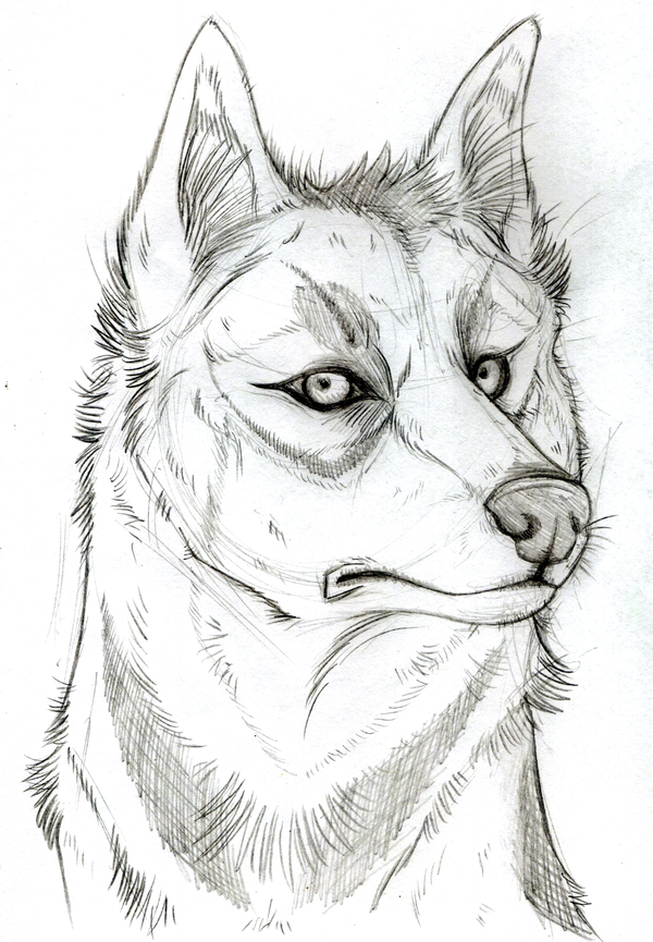 Nick Realism SKETCH by KasaraWolf
