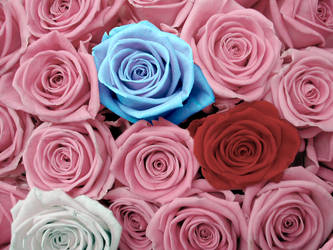Color roses by griffe
