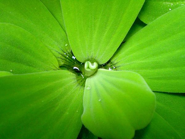 green by r-e-born