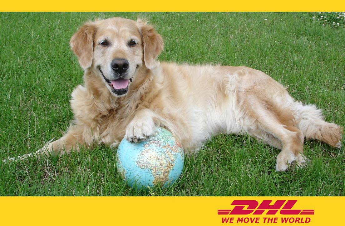 Doggie Do S Mobile Dog Grooming Wilmington Nc