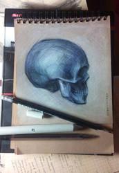 skull by grinningrabbit