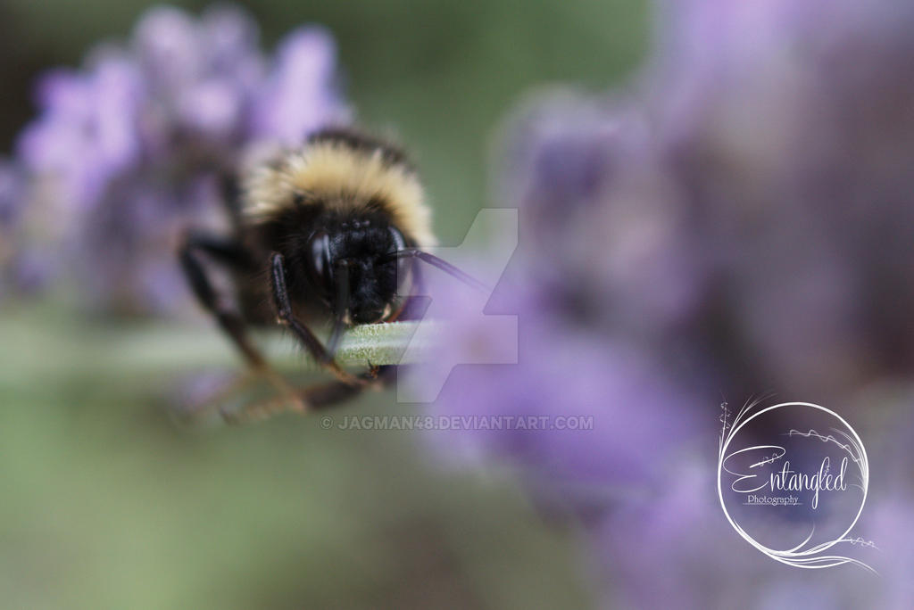 Bee 3 by Jagman48