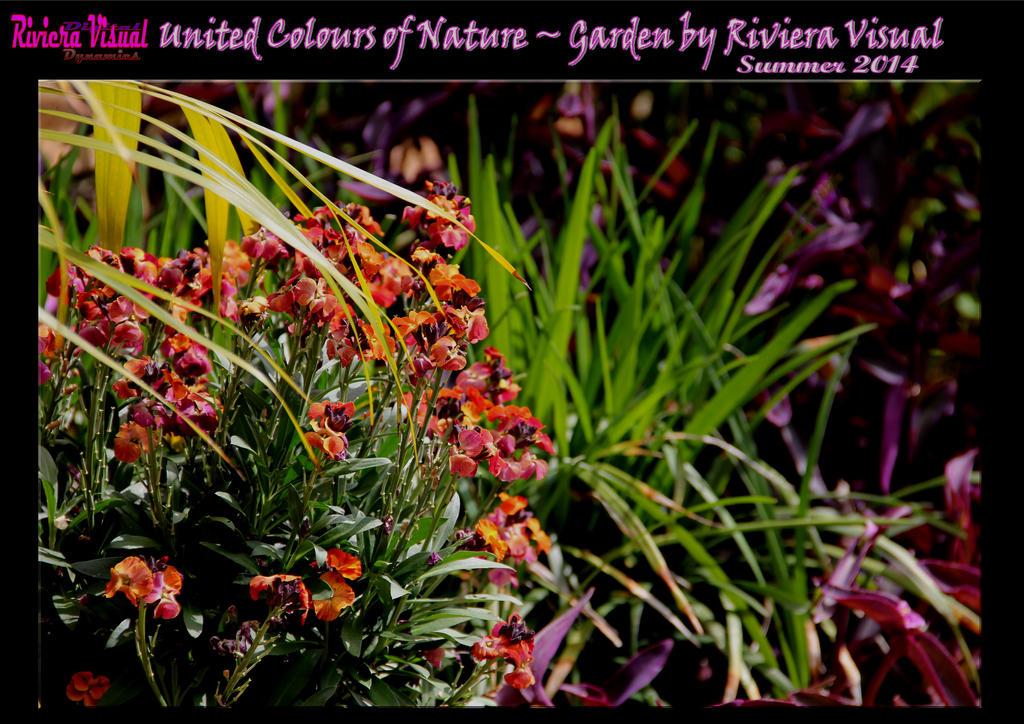 Riviera Visual Digital Dynamics - My Summer Garden by RivieraVisual
