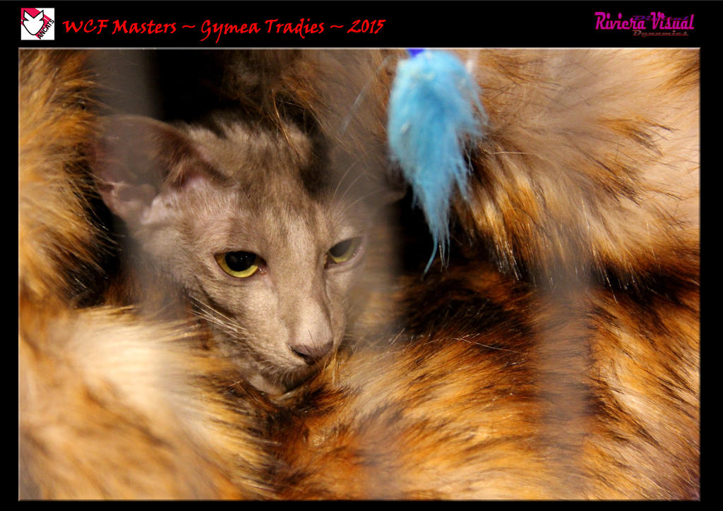 ANCATS ~ WCF Masters ~ Gymea Tradies ~ 2015. by RivieraVisual