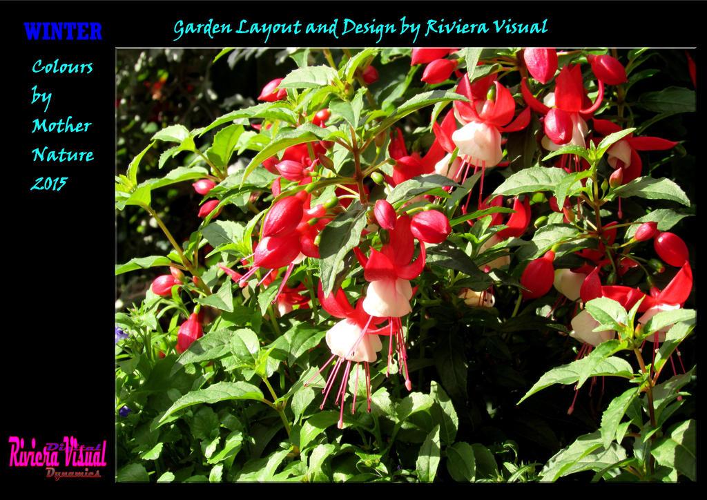 Garden Design by Riviera Visual by RivieraVisual