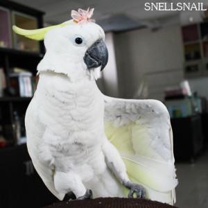 SnellSnail's Profile Picture