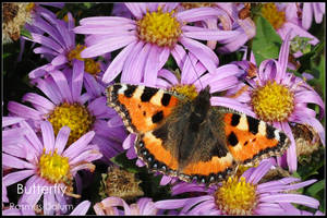 Butterfly by dalum