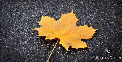 Fall by dalum