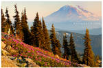 Wildflowers Under Mt. Adams by Raymaker