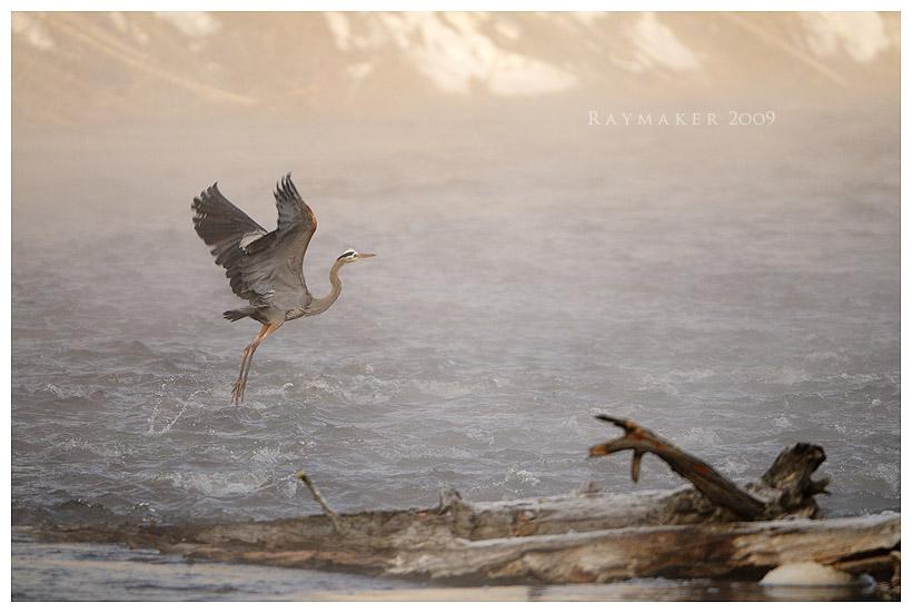 Morning Flight by Raymaker