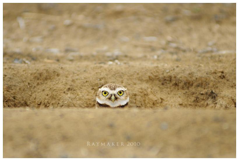 Peek by Raymaker