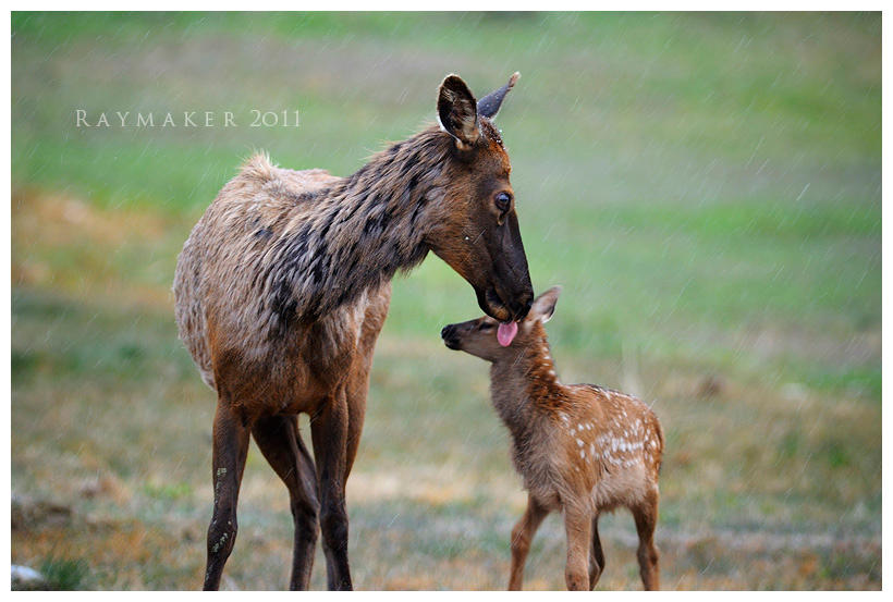 Motherly Love by Raymaker