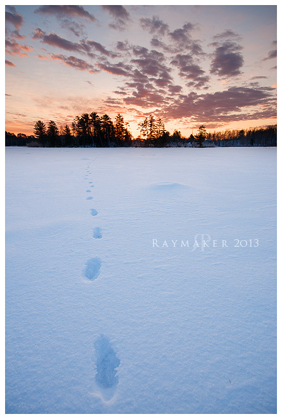 Winter Wolf Tracks by Raymaker